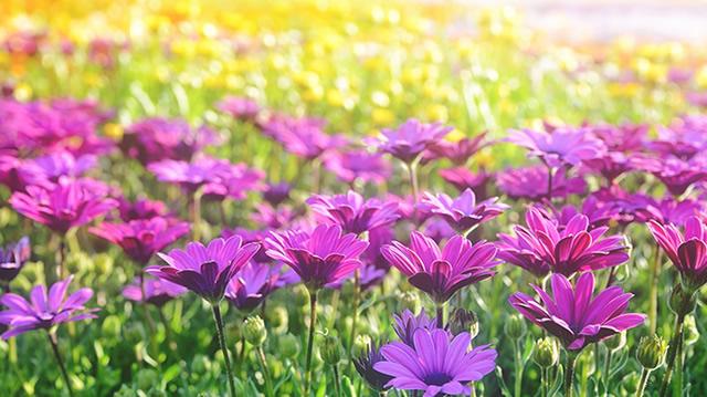 我がフィールドは大輪の花畑